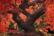 Gli alberi sono uno splendore