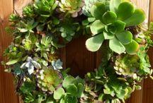 Gardening / by Lorna P.D.
