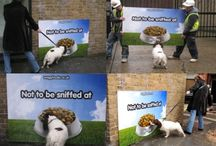 Funny and clever marketing / Marketing that made us chuckle or announce 'what a great idea' - we hope you like them too.