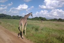 Kenya camping safaris / Do you want to enjoy the Kenya camping safaris experience? Call us at +254 (0)20 2244068 today to book your Kenya safari holiday.