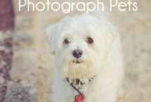 Pet Photography / We love pets. And pictures of pets! To learn some great tips and tricks for taking photographs of your favorite animals, visit our photo tutorial by copying and pasting this URL into your browser: http://bit.ly/MQkiYr / by Picaboo