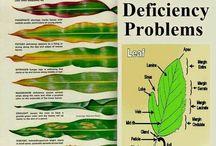 nutrient deficiency problem