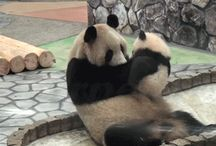 Cute Animals / cute animal pics