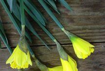 Happy March Birthday / Happy March Birthday from Freytag's Florist. March Birth Flower and Birthstone; Daffodils &  Aquamarine. / by Freytag's Florist