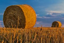 Agriculture / PAYSAGES | RURAL | CHAMPS | TERRE | CULTURES | ELEVAGE