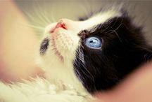 Grandes miradas que te aran soñar