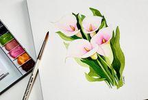 pigs ears arum lilies