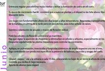 Calendario de Jardinería - Agronatur / Calendario de Jardinería de Agronatur Ingenieros para saber que tareas realizar en nuestros jardines y terrazas mes a mes.