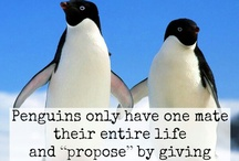 Happy Feet - Penguins