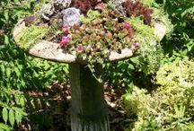Little Miss Fancy Plants. / creative gardening combinations / by Mary Beth Burrell