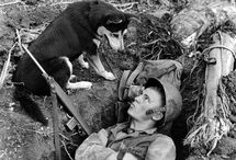 """Budd's / The strong bond between animals and humans, in times of war and peace. True buddy's, or """"Budd's"""" in army slang."""