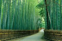 Amazing Arashiyama Bamboo Forest to See / Arashiyama, located in Kyoto, Japan is a place of serene beauty. If you have a plan to travel Kyoto, never ever miss an opportunity to go to the Amazing Arashiyama Bamboo Forest which makes you feel in heaven. These greensih bamboo groves probably be the most photographed sights in the city. Once you get into the main road of the bamboo grove it leads to the uphill near by. We have 10 Amazing Arashiyama Bamboo Forest pictures to share you with.