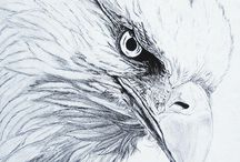 Bird and animals