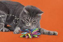 DIY Pet Items