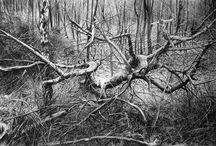 ARTWORK~ trees:drawings/paintings / by Patti Umlauf