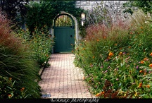 garden / by Charla Henderson
