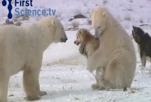Dogs,bears and the other animals