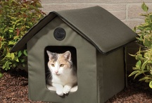 Helping Feral or Outdoor Cats / by Barbara Berendt