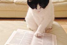 Kitap okuyan kediler