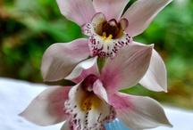 cukrove květy