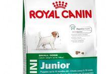 Buy #Royal_Canin_Mini_Junior - 4 Kg online Royal Canin Brand at reasonable Price