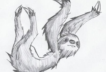 sloth, just hangin' out