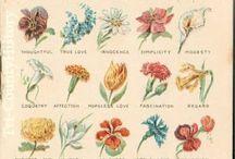 language of flowers.