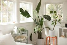 living house plants