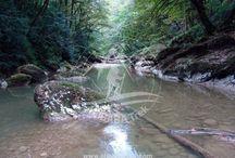 Iran northern jungle