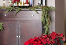 Home decoration with Poinsettia