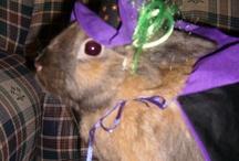 Best Dressed Bunnies