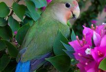 Other birds