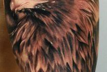 Aguilas