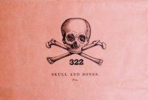 Skulls & Skeletons  / My skull, skeleton & bones obsession. / by Carla Sofía