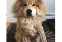 Réalisations en laine canine / Photos de réalisation en laine de chien