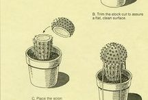 all about cactus