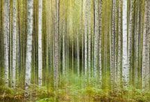 Nature / Parhaat luontokuvat