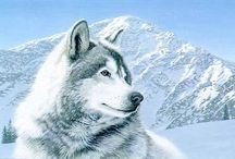 Lobo Animal Mamífero / Lobo Animal Lobo é o maior membro selvagem da família canidae. É um sobrevivente da Era do Gelo, originário do Pleistoceno Superior, cerca de 300 mil anos atrás.