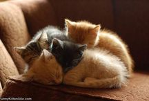 Puppies and Kitties / by Madeline