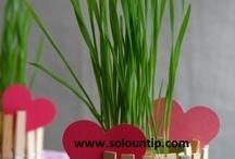idee piante e orto