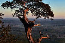 Arkansas, My Home / by Laurell Newton