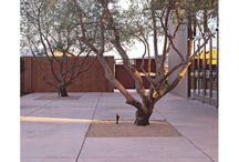 Modern Landscape / modern landscape architecture / by Martha McQuade