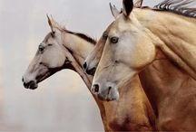 [all the pretty horses] / horses. horses. more horses. / by Lydia Kay