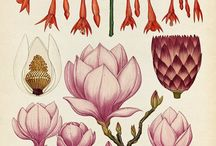 ILLUSTRATION: botanical