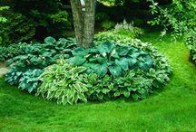 puutarhan kasvit