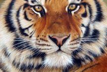 Dibujo de tigre