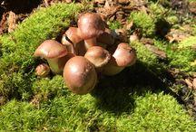 Fungus on Red Mountain Pass / Mushrooms and fungi