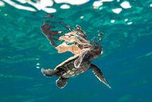 Summit - Turtle Islands Wildlife Sanctuary