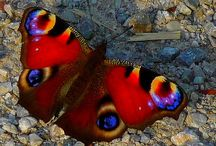 ~ Butterflies, Birds & Other Winged Beauties ~- / by Tammie Wilcox-Polach