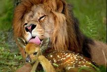 natures pets